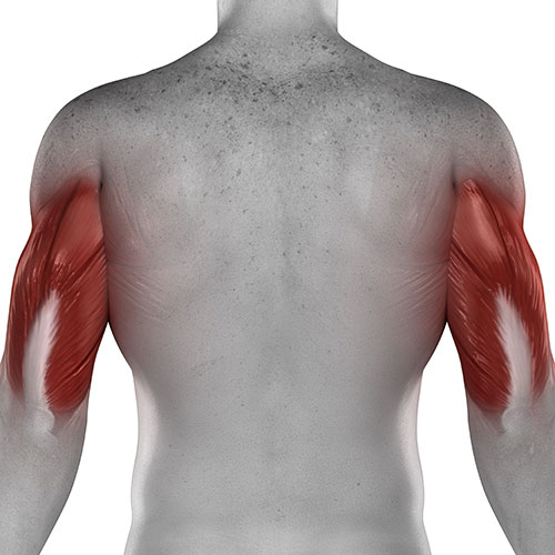 Distal Tricep Tear Treatment in Chicago